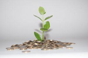Plantas que atraen dinero